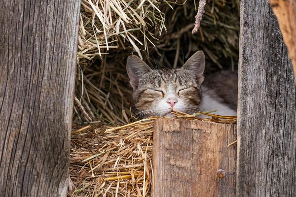 A working cat sleeping on farm. Kitten and cats available to adopt at EASEL Animal Rescue League Shelter & Pet Adoption Center.