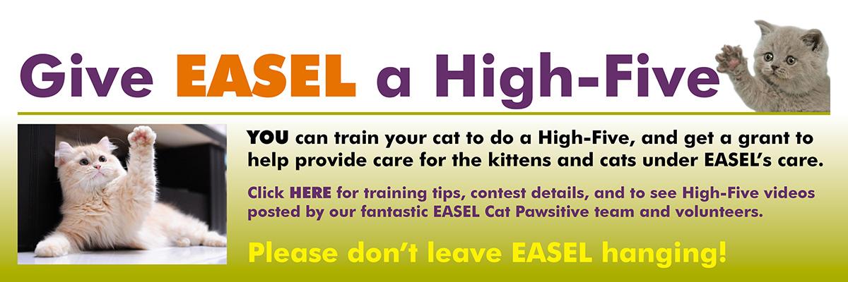Home - EASEL Animal Rescue League & Pet Adoptions